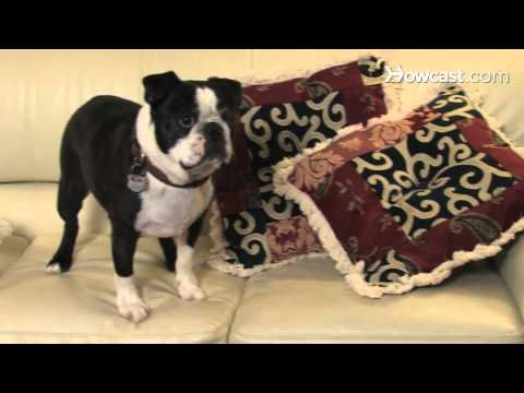 How To Protect Your Furniture From Pets