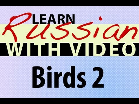 Learn Russian with Video - Birds 2