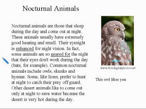 Intermediate Learning English Lesson 14 - Sleep  - Vocabulary and Pronunciation