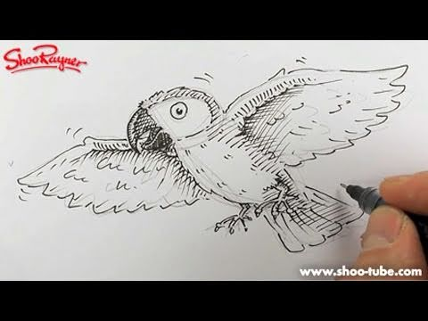 How to draw a cartoon Parrot - Spoken Tutorial