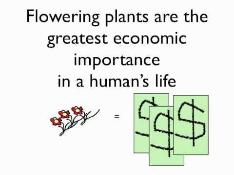 Biology Plants