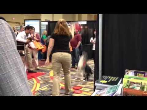 Dog tricks!