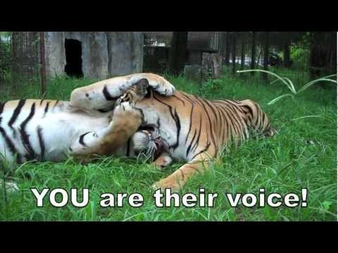 ACTION ALERT: Save the Tiger!