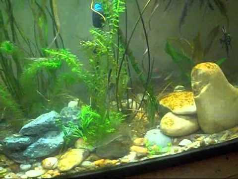 29gallon episode 1 part 1.wmv