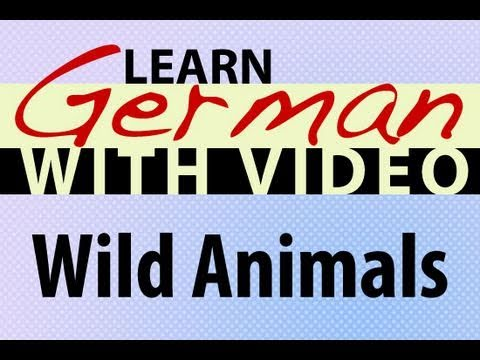 Learn German with Video - Wild Animals