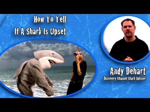 Shark Week 101: How to Dodge a Charging Shark