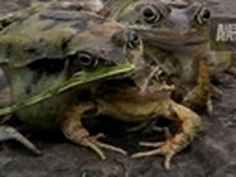 Weird, True & Freaky: 3-Headed Frog