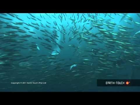 Animal predators gather for a feeding frenzy