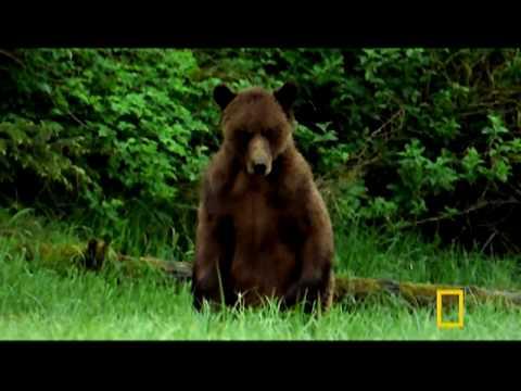 Man Fights Bear
