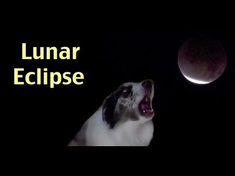 Lunar Eclipse to dogs howling- Dec 10 2011- dog training