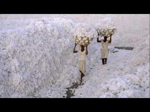 7.   Gujarat • India