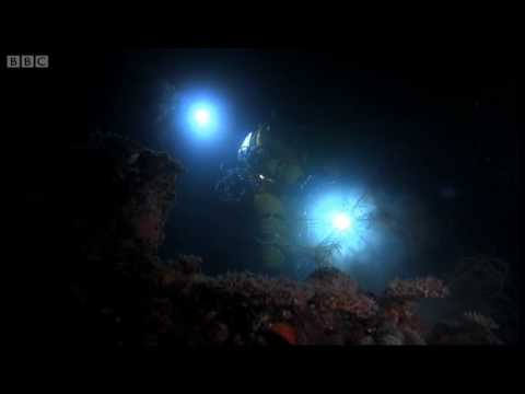Yellow submarine - Pacific Abyss - BBC