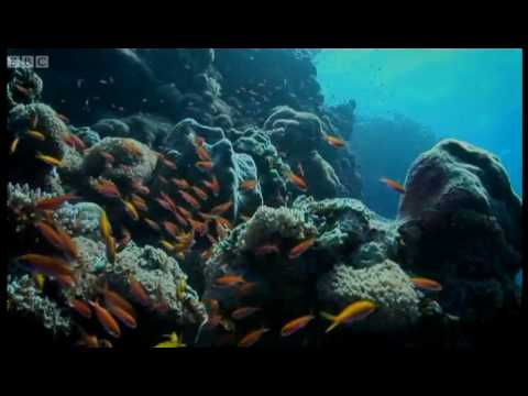 A voyage of discovery - Pacific Abyss - BBC