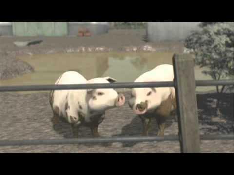 Thomas & Friends: Thomas and the Pig Farm