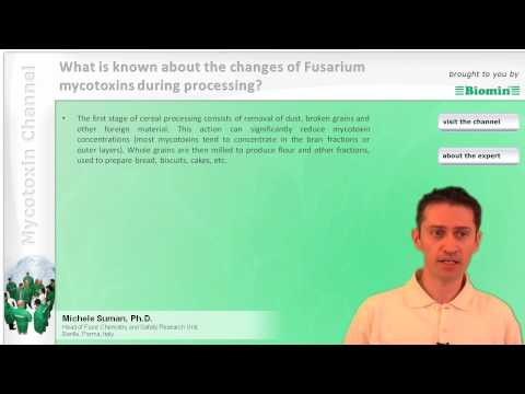 What is known about the changes of Fusarium mycotoxins during processing?