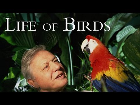 Life of Birds: Meat Eaters