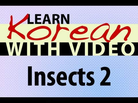 Learn Korean with Video - Insects 2