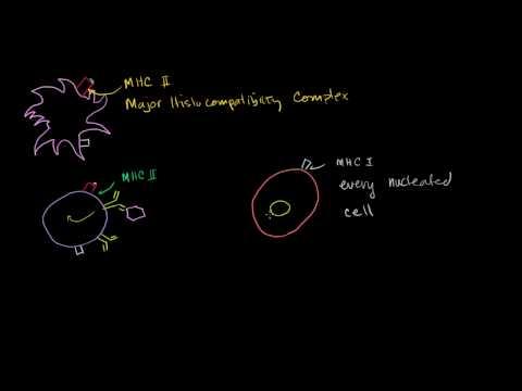 Cytotoxic T Cells