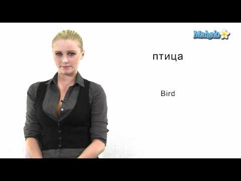 "How to Say ""Bird"" in Russian"