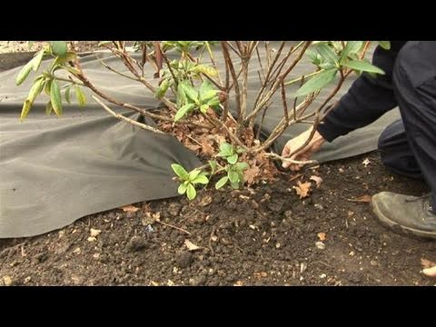 How To Keep Weeds From Growing Using Sheet Mulch