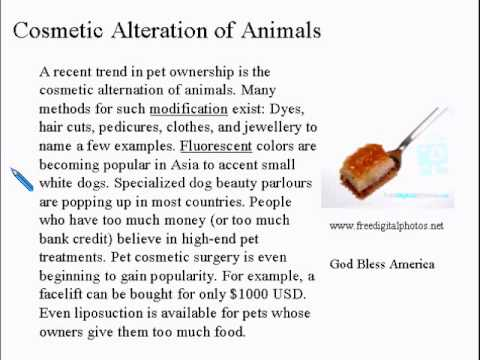 Advanced Learning English Lesson 7 - Should we have pets? - Vocabulary and Pronunciation
