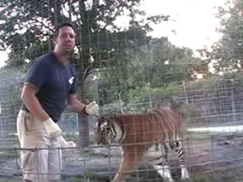 !!!TIGER VS MAN!!! - Big Cat TV