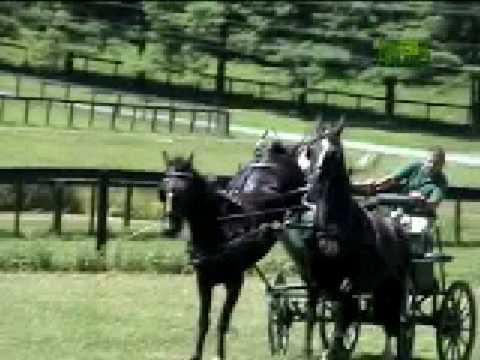 Horse Kicks Rider's Face