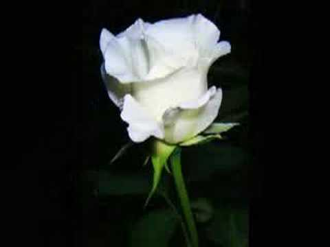 Original Poem+Music - The Rose