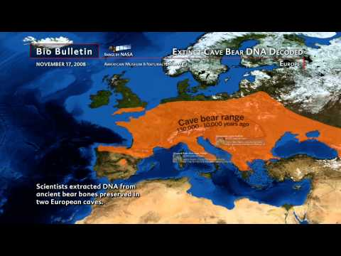 Science Bulletins: Extinct Cave Bear DNA Decoded