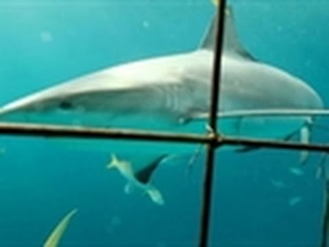 Shark Week 2011 - Scary Cage Dive