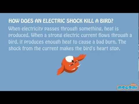 How Do Birds Sit Safely On Power Lines ?