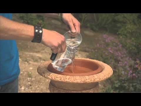 How to Clean Your Bird Bath