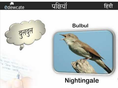 Learn Hindi : Bird Names