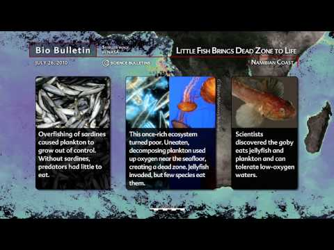 Science Bulletins: Little Fish Brings Dead Zone to Life