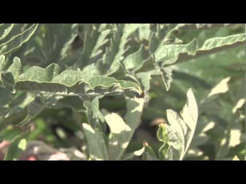 What alternative methods for bugs & rodents control
