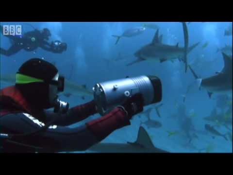 Shark Rodeo - Smart Sharks - BBC Earth