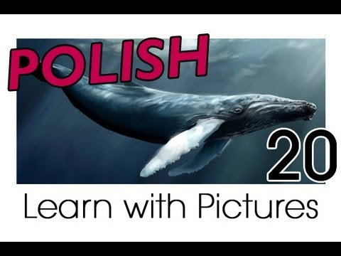 Learn Polish with Pictures - Marine Animals