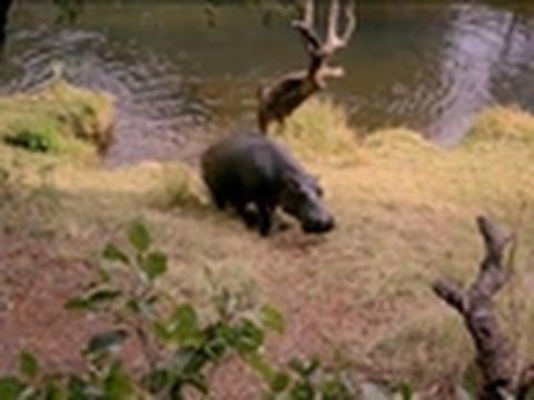 Pet Hippo | An Idiot Abroad