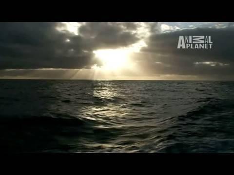 Whale Wars: A 300-Mile Storm