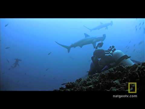 Shark Island Swarms
