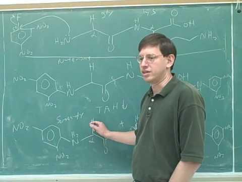 Organic chemistry: Amino acids and peptides (19)