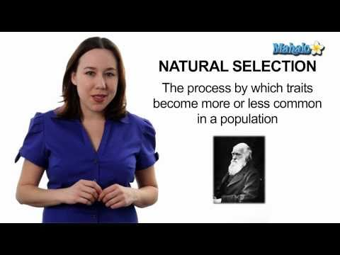 Learn Biology: Natural Selection