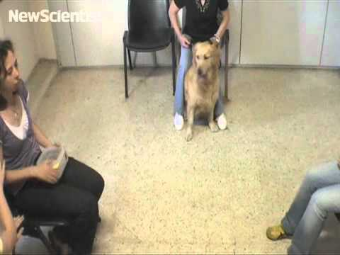 Dog eavesdrops as a person begs for food