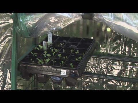 How To Create A Miniature Greenhouse