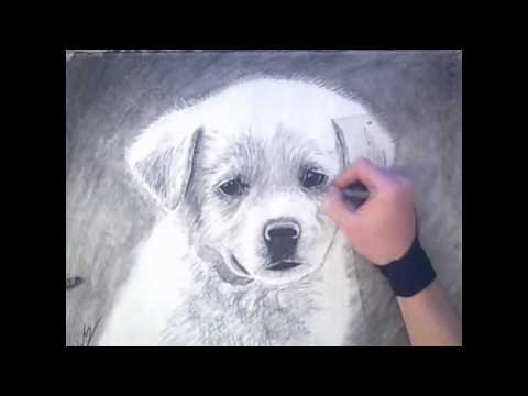 Speed drawing puppy