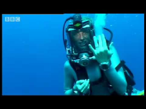 A visit to the tropical reef - Dive Caribbean - BBC wildlife