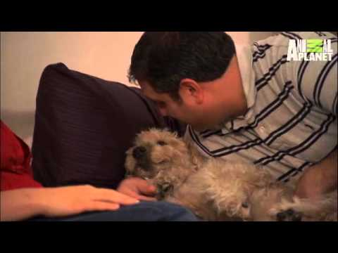 It's Me or the Dog- Loving from Afar | Indoor Tips