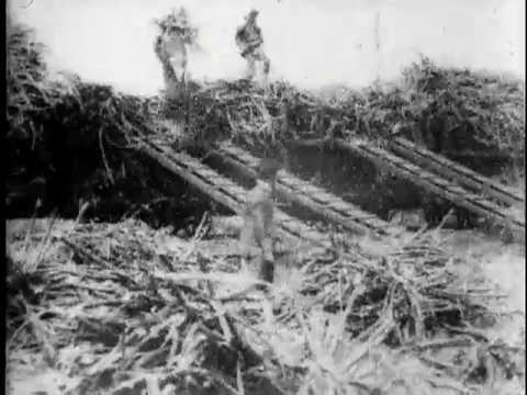 Loading sugar cane