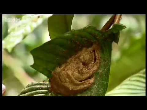 Closer Look at the Forest - Expedition Borneo - BBC wildlife