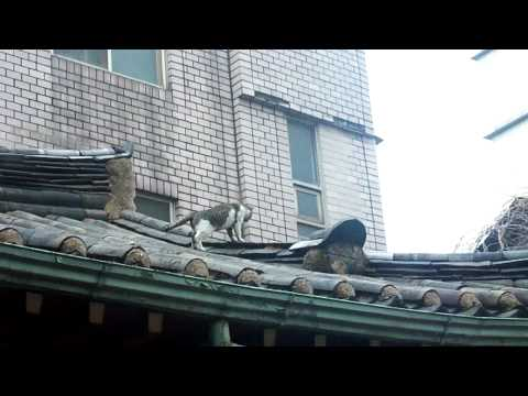 A cat on the roof